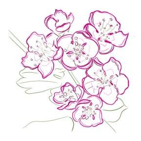 Hawthorne-Flower